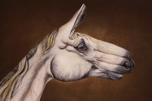 Horse-White-on-brown1-507x340