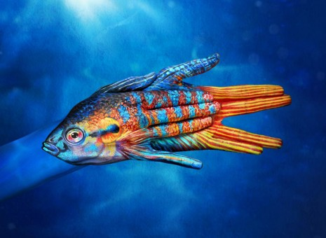 Paradise-Fish-465x340