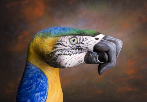 Parrot-on-brown1-486x339