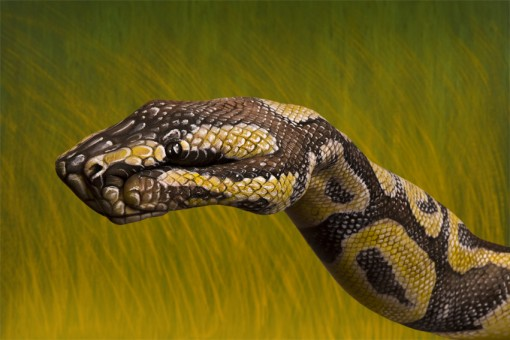 Python-510x340