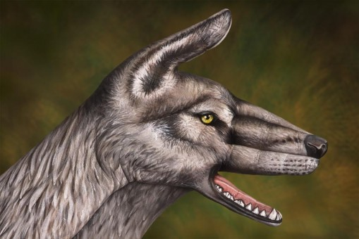 Wolf-mail-509x340