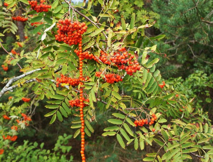 climbing_down_ashberry_land_art_sm-680x519