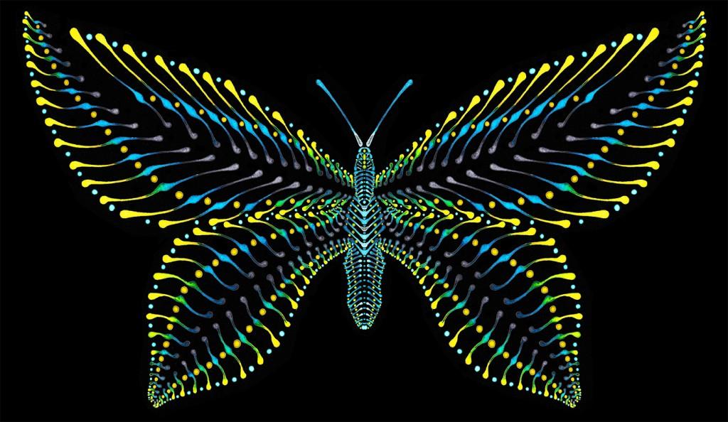 Butterfly_V1_0b_72-1024x594