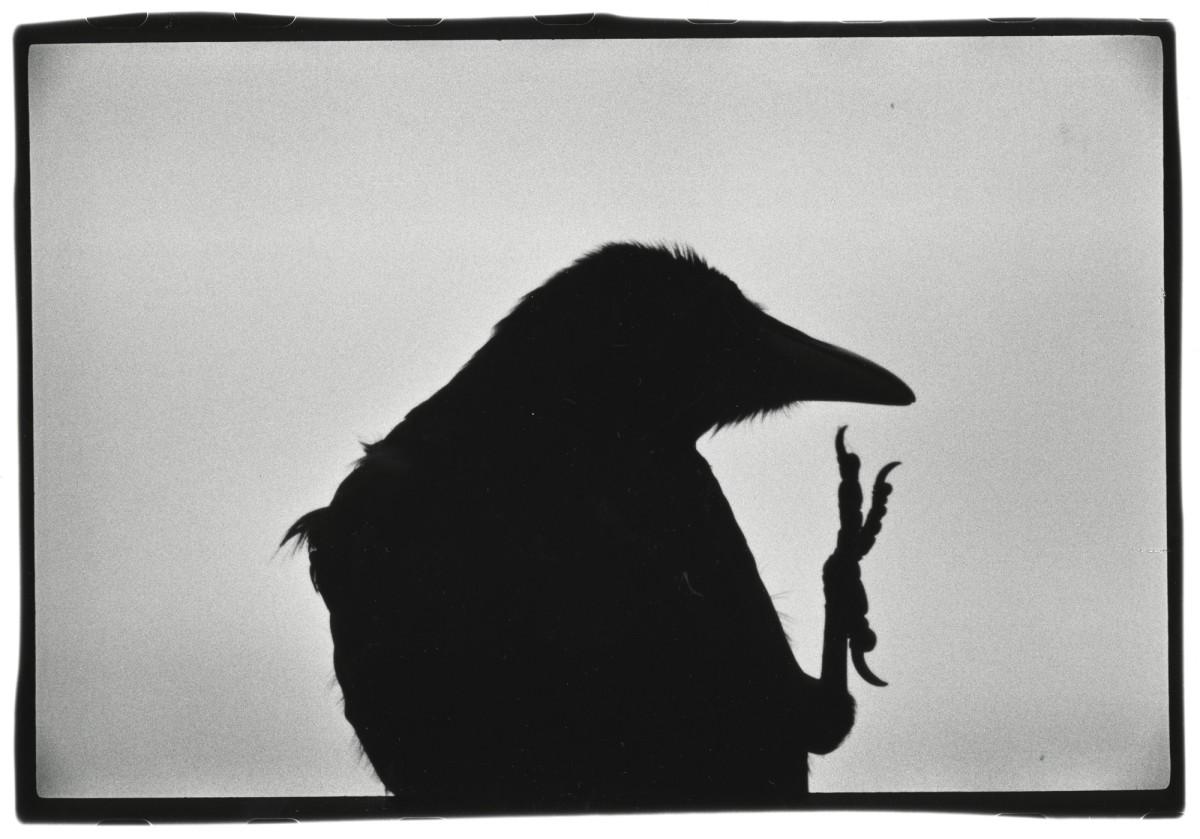 ravens020-s-