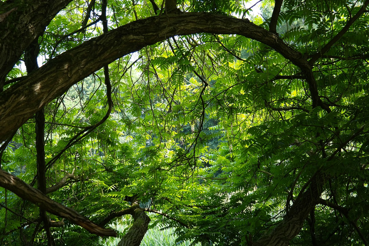 tree-141692_1280