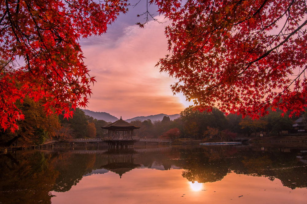 THE BEAUTY OF JAPANESE AUTUMN – BY JUNE MIYOSHI
